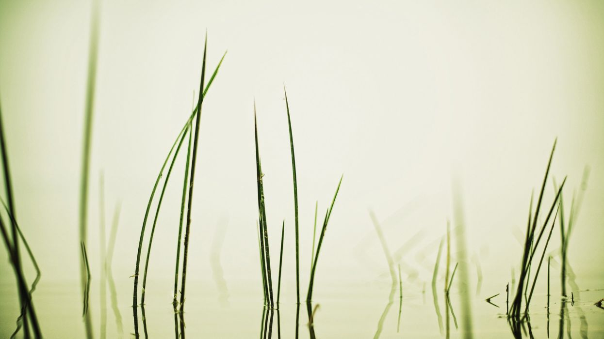 grass serene wallpaper