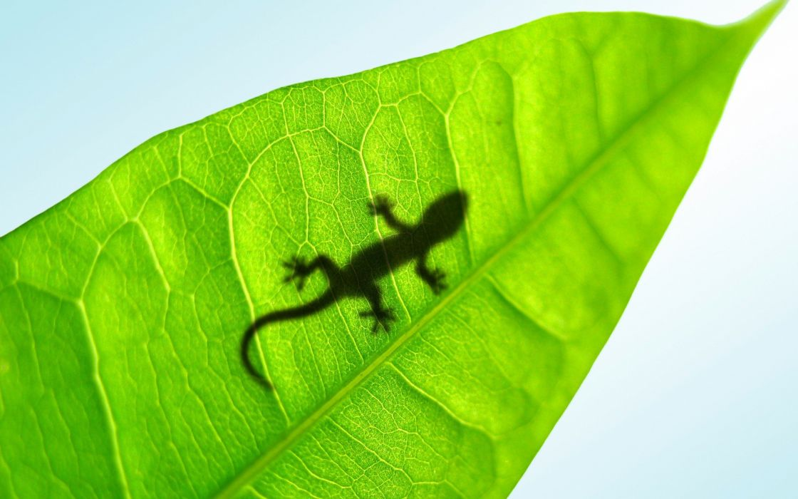 leaf animals silhouettes reptiles wallpaper