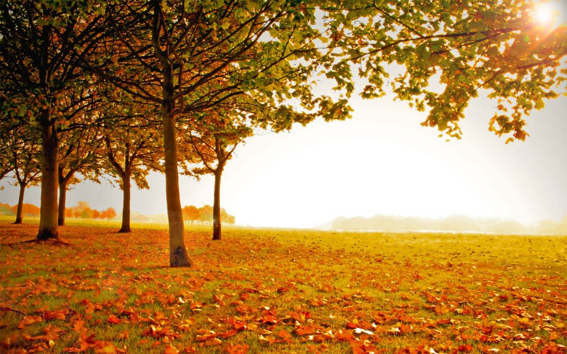 landscapes autumn wallpaper