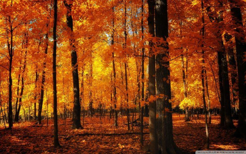forests orange wallpaper