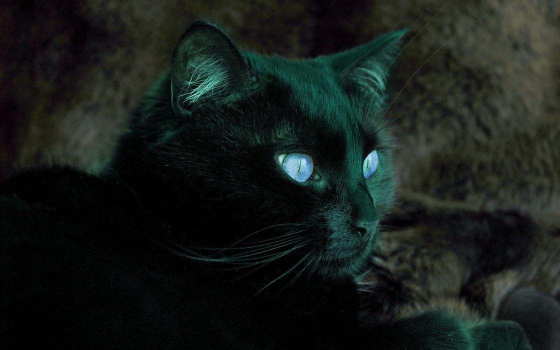 cats Cat eye wallpaper