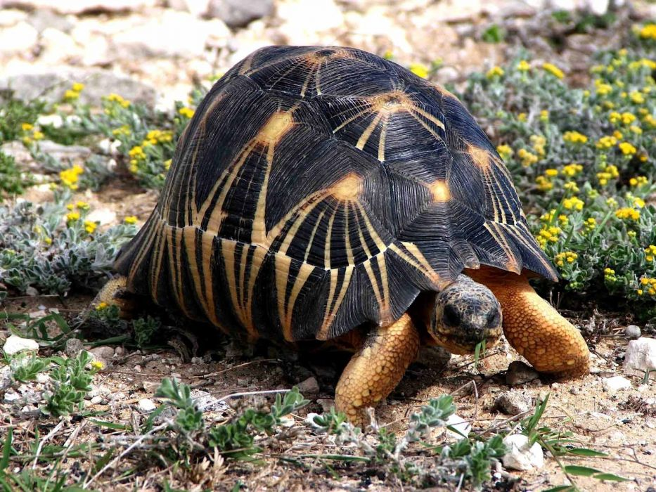 nature reptiles tortoises wallpaper