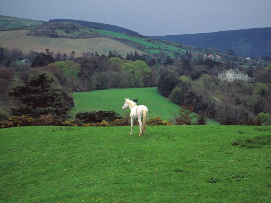 green nature trees forests hills Ireland horses countryside skyscapes castle wallpaper