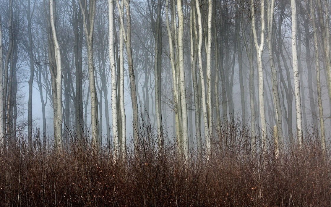 trees autumn forests mist wallpaper