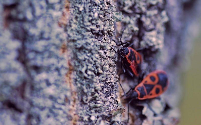 close-up nature bugs wallpaper