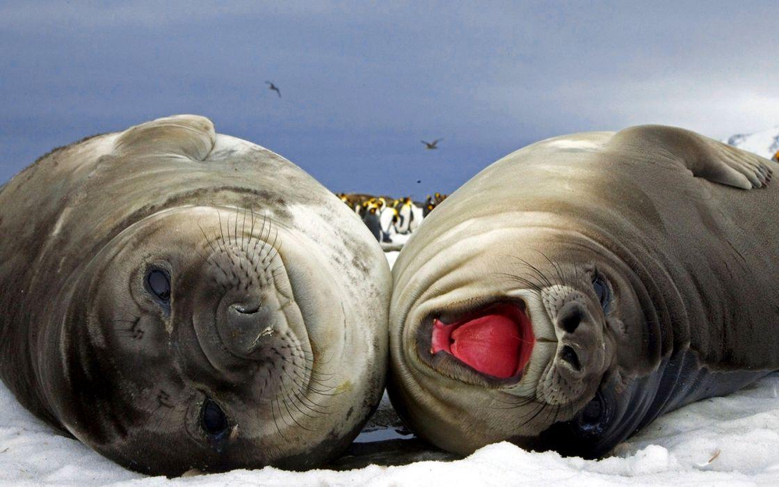 animals wildlife wallpaper