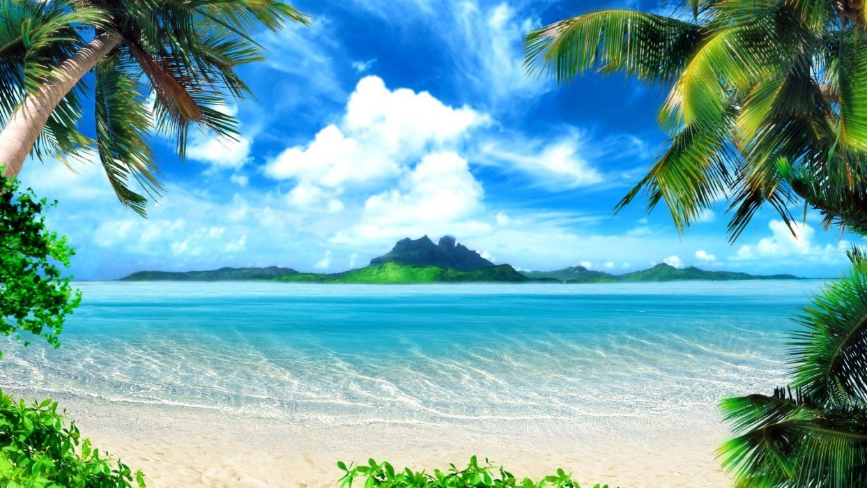 landscapes nature trees tropical palm trees Seascape sea beaches wallpaper