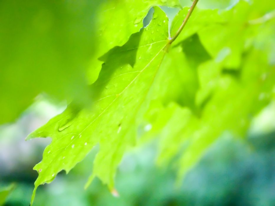 green close-up nature wall leaves grass water drops Flora floral wallpaper