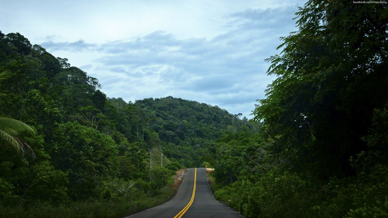 landscapes nature trees cityscapes jungle forests architecture roads wallpaper