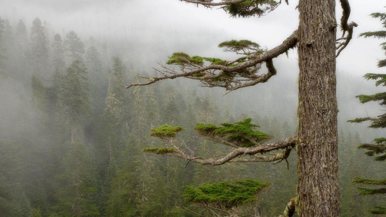forests fog National Park Mount Rainier wallpaper