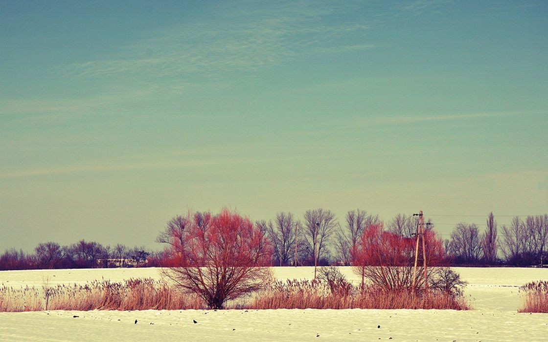 snow trees fields wallpaper