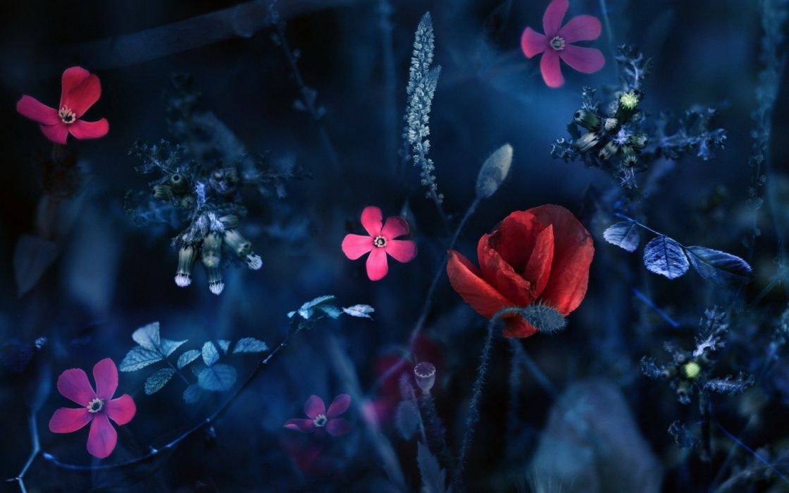 abstract blue artistic flowers red flowers pink flowers wallpaper