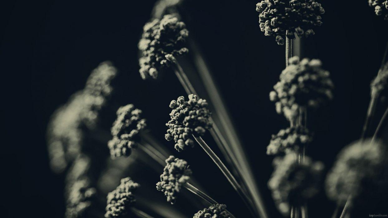 dark night flowers monochrome macro wallpaper