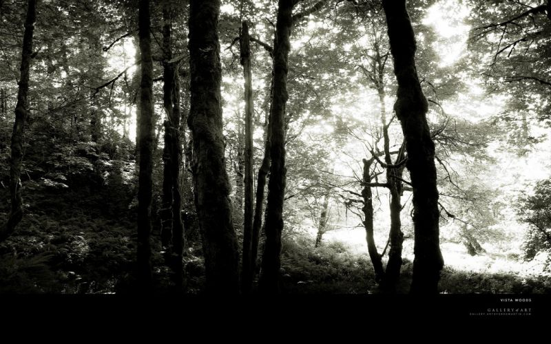 trees forests grayscale monochrome wallpaper