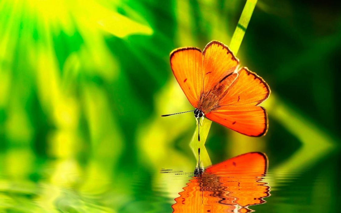 Green Water Nature Orange Insects Wildlife Reflections