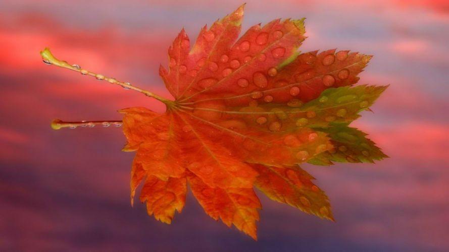 sunrise autumn maple leaf wallpaper