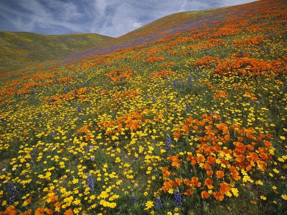 landscapes California poppy wallpaper