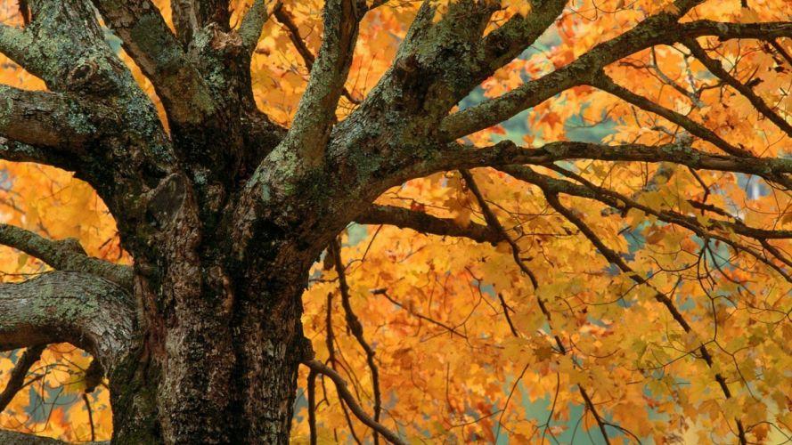 autumn bass North Carolina wallpaper
