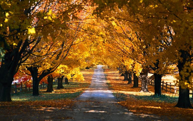 landscapes trees autumn paths wallpaper