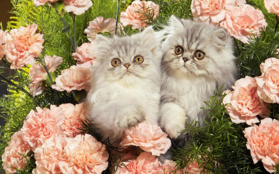 cats kittens roses baby animals wallpaper