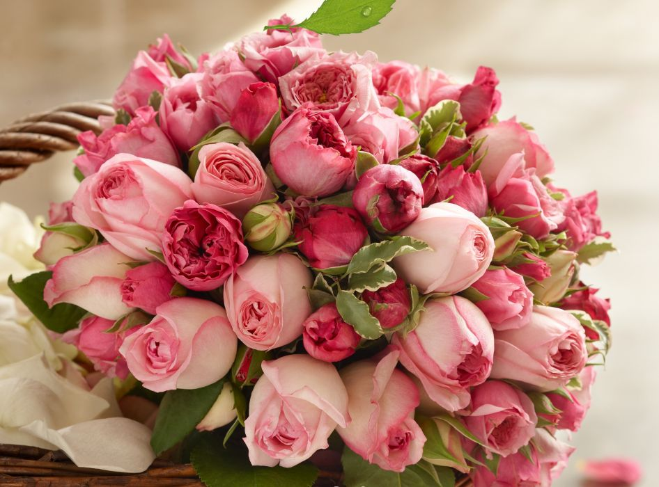 bouquet pink pink buds beauty roses rose wallpaper