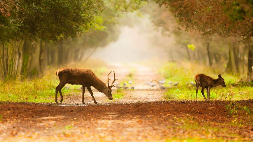 deer trail birds fog trees wallpaper