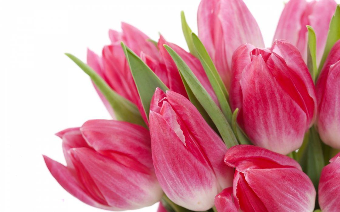 flowers bouquet pink beauty flowers bright tulips wallpaper