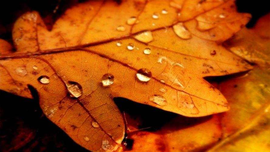 landscapes autumn forests wallpaper
