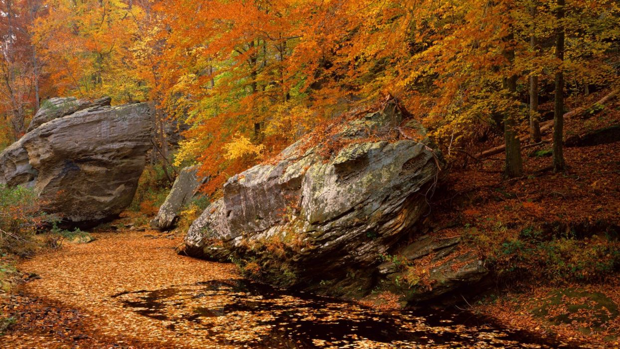 landscapes autumn forests national Illinois Smith area wallpaper