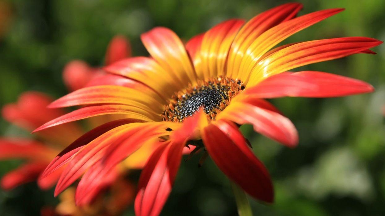 close-up nature flowers macro wallpaper