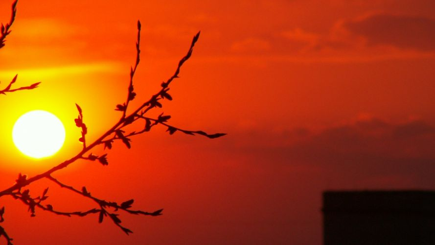 sunset Sun branches wallpaper