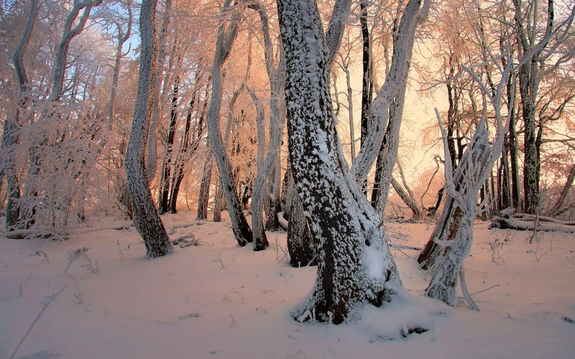winter snow trees forests magic wand frost Janek-Sedlar wallpaper