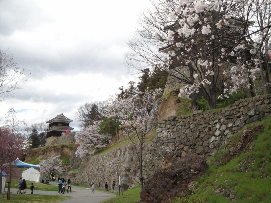Japan castles cherry blossoms flowers Sakura spring wallpaper