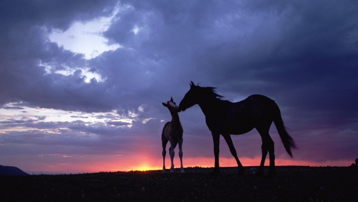 nature animals horses skyscapes baby animals wallpaper