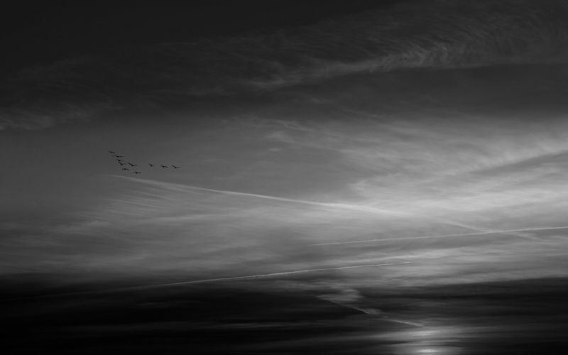 black and white geese skies wallpaper