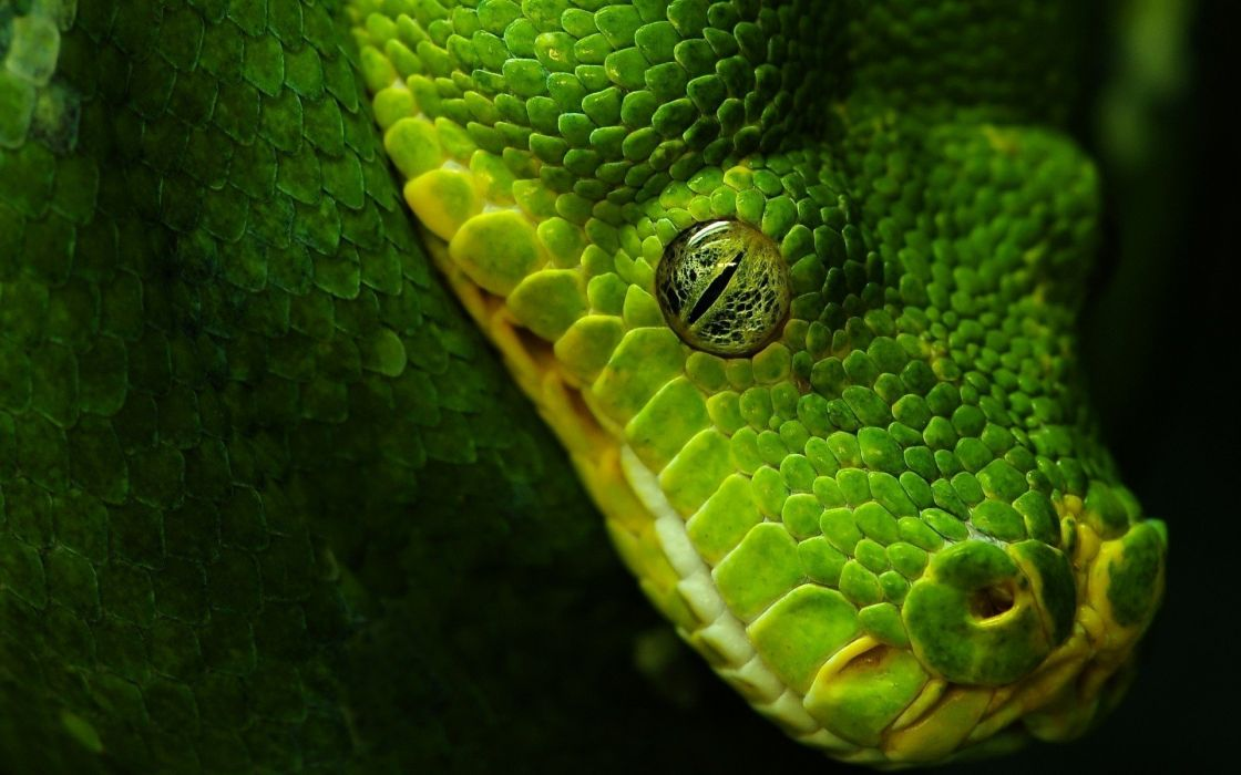 green animals snakes wallpaper