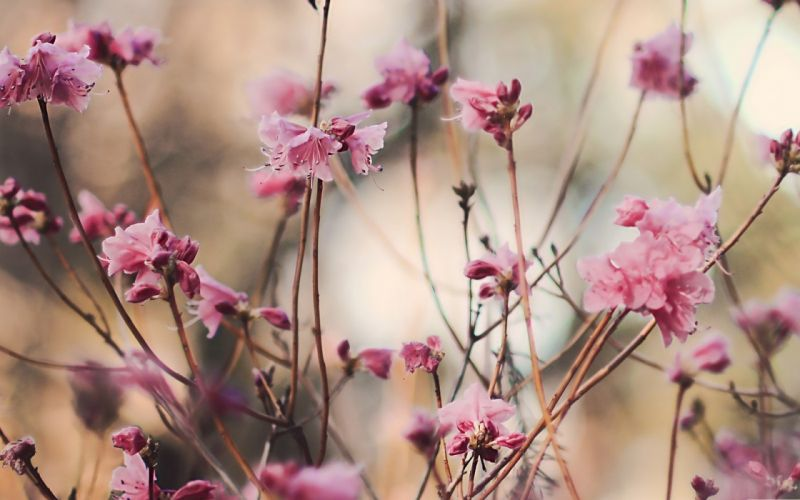 nature flowers spring blossoms wallpaper