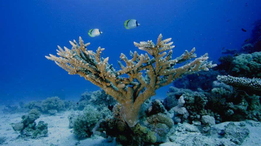 ocean fish coral wallpaper
