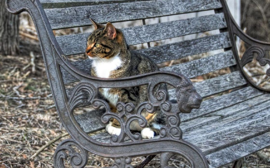 cats bench HDR photography wallpaper