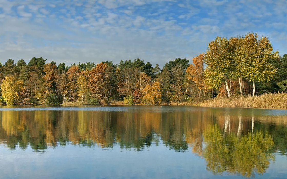 landscapes nature trees forests reflections wallpaper