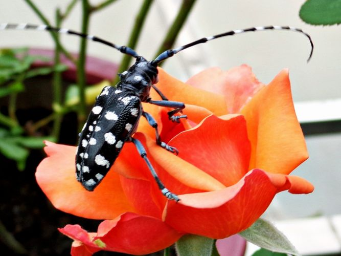 nature flowers insects Bug wallpaper