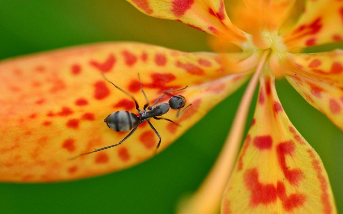 animals ant wallpaper