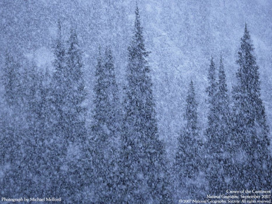 winter forests National Geographic wallpaper