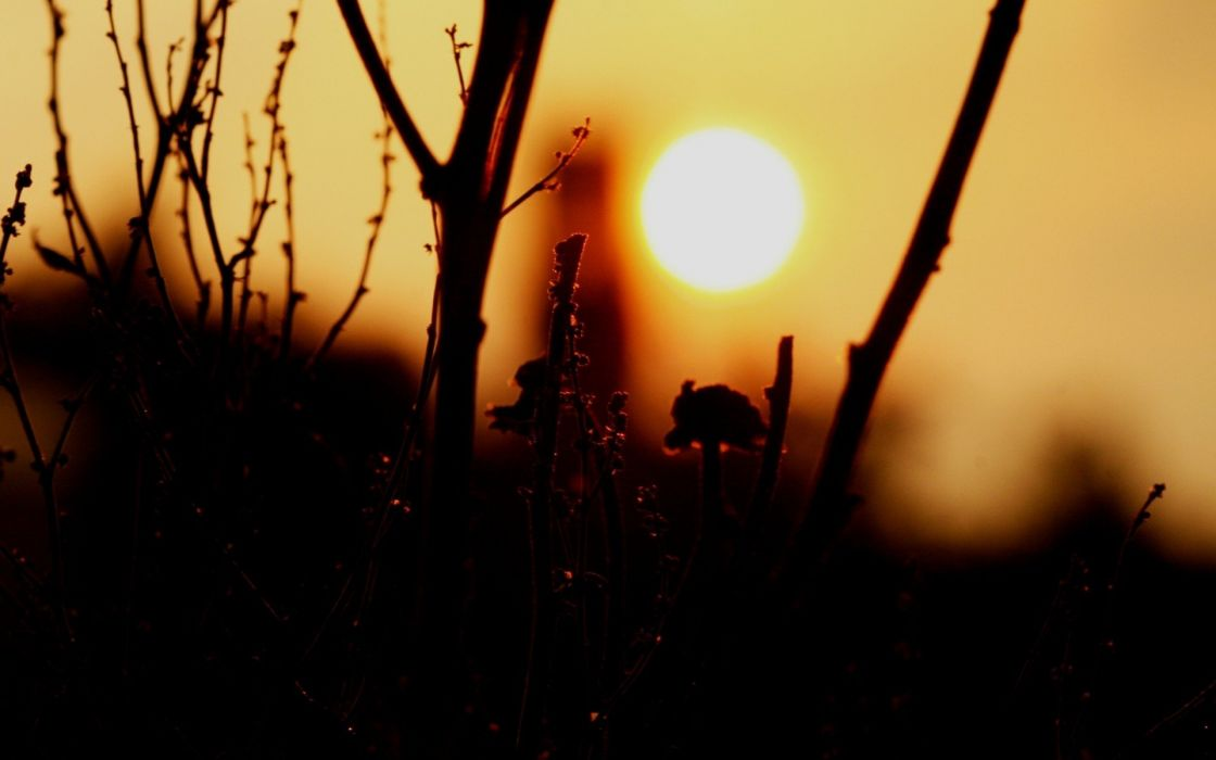 nature Sun silhouettes plants branches wallpaper