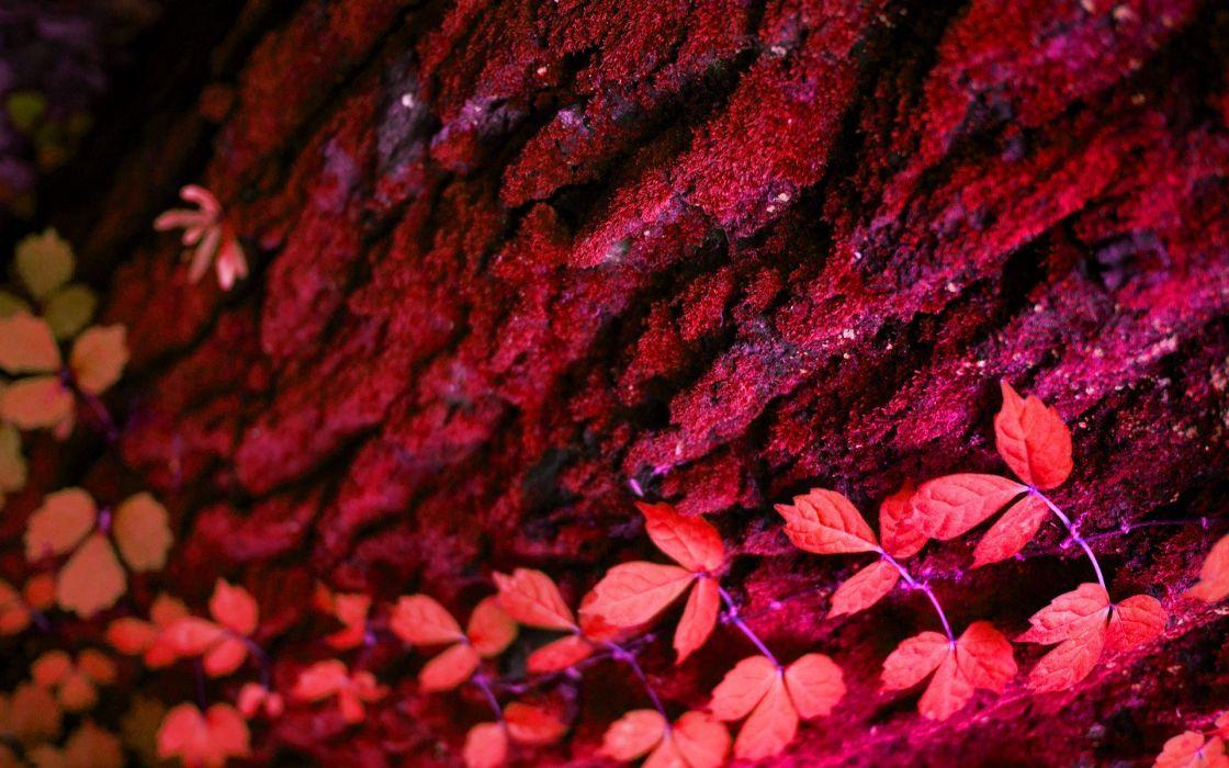 wood plants wallpaper