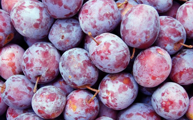 close-up fruits plums Plum wallpaper