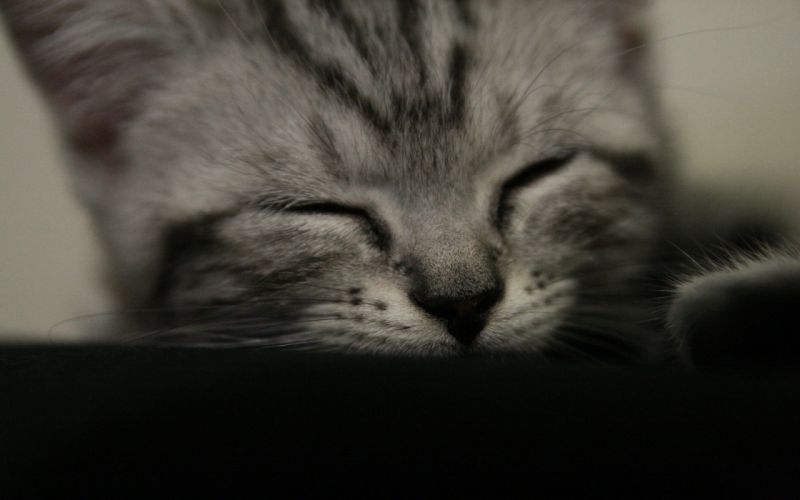 close-up cats animals sleeping closed eyes wallpaper