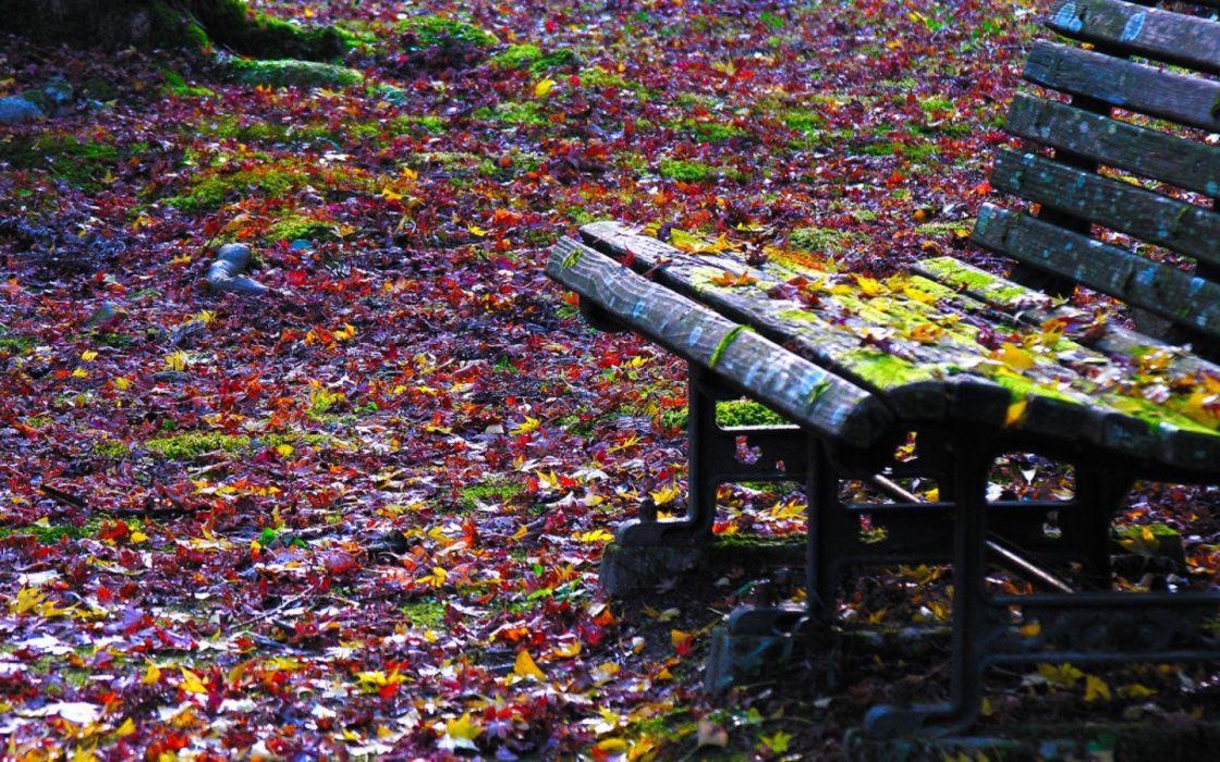 autumn leaves bench fallen leaves wallpaper