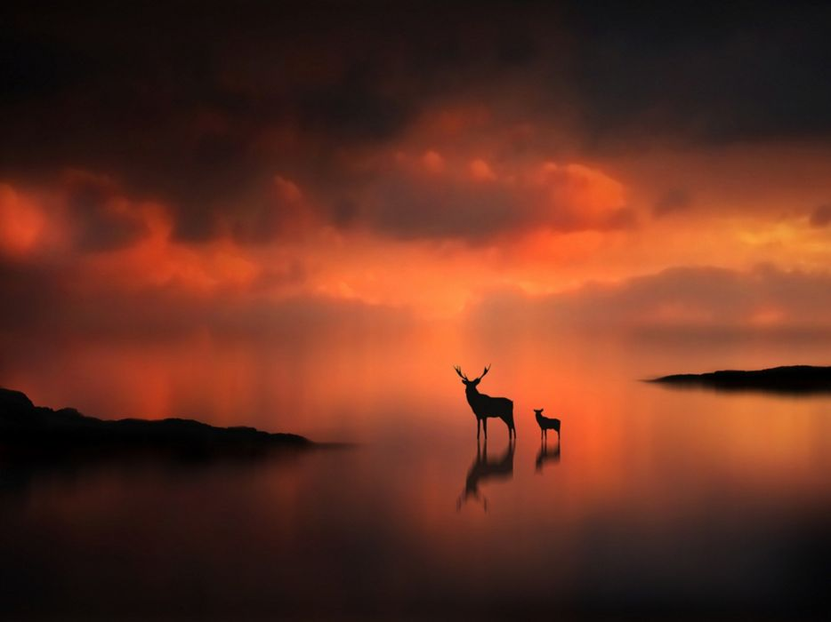 sunset animals silhouettes mist deer fawn wallpaper