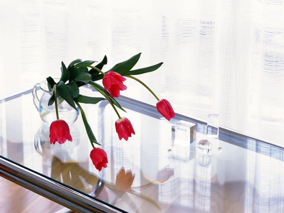 flowers tulips still life wallpaper